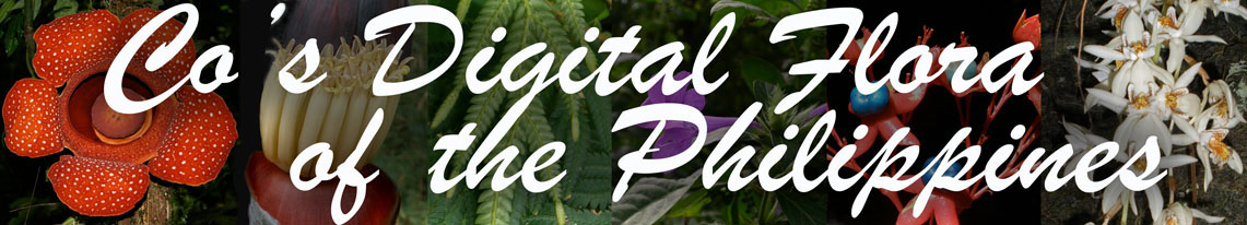 Co's Digital Flora of the Philippines